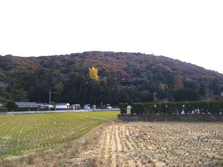 ファイル 20101128_saijyouinari1-5.jpg