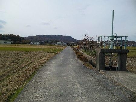 ファイル 20101128_saijyouinari2.jpg