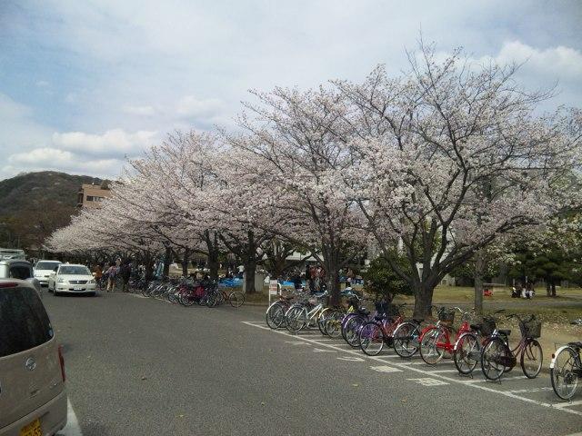 ファイル 20110407_okadai_sakura.jpg