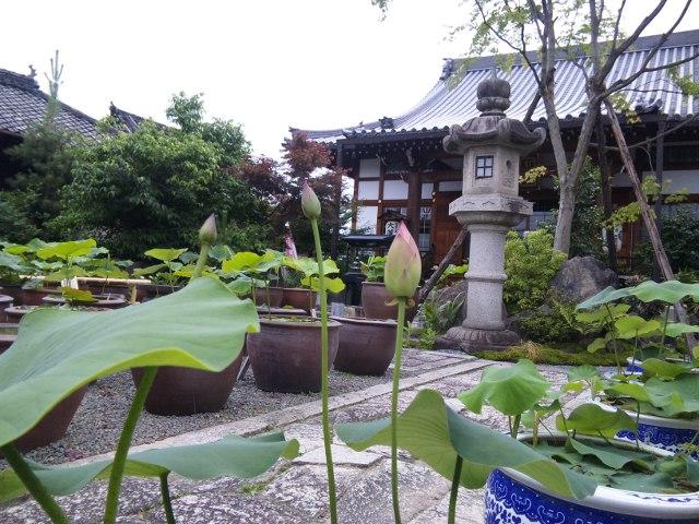 ファイル 20110614_dairenji_sinnyodo-2.jpg