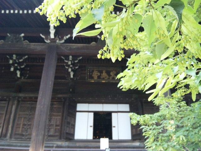 ファイル 20110614_dairenji_sinnyodo-3.jpg