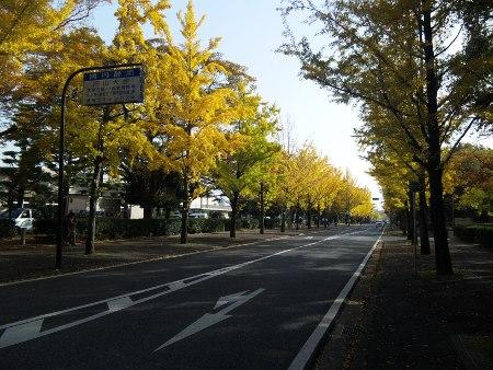 ファイル autumnal_leaf-2.jpg